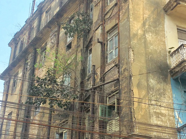 A plant growing out of an old building in Kolkata