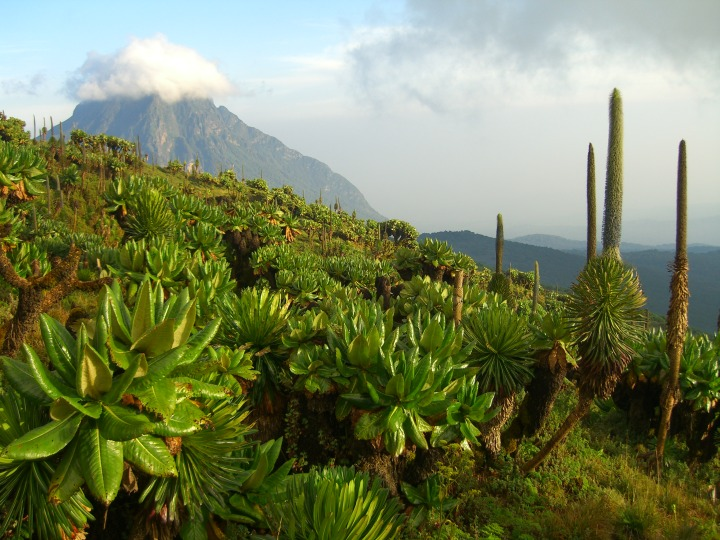 The view from Mount Karisimbi towards the north and the peak of Mount Mikeno in DR Congo