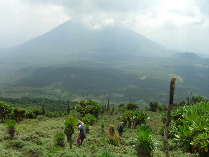 The lower slopes of Mount Karisimbi in Rwanda