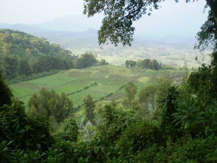 The arable land at the base of the volcanoes in Rwanda