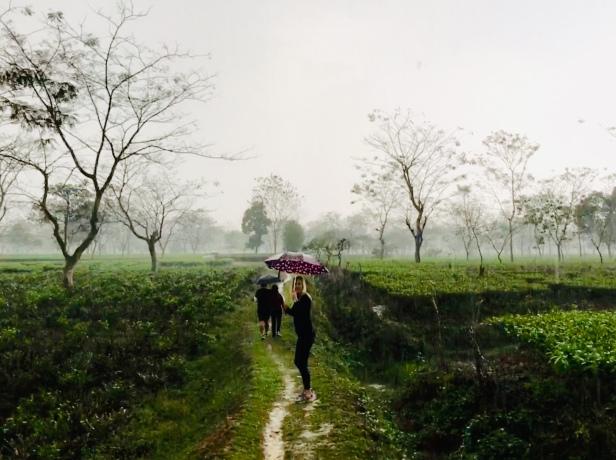Tea estate in Assam in the rain