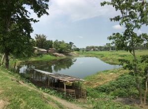 Village scenes in Majuli, Assam, heyloons