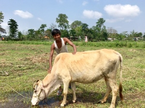 A cowherd with cow, Majuli, Assam, India
