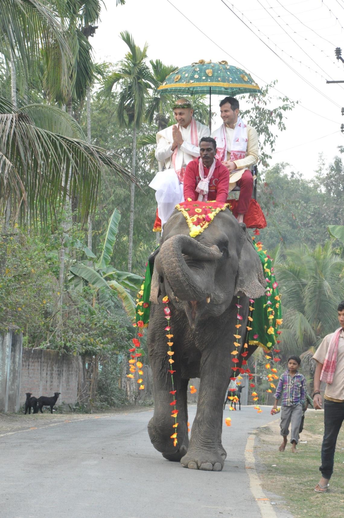 Wedding elephant in Assam, India